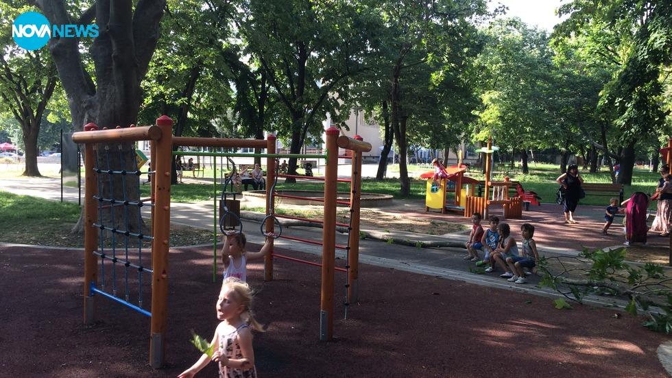 Огромен клон падна на детска площадка във Видин