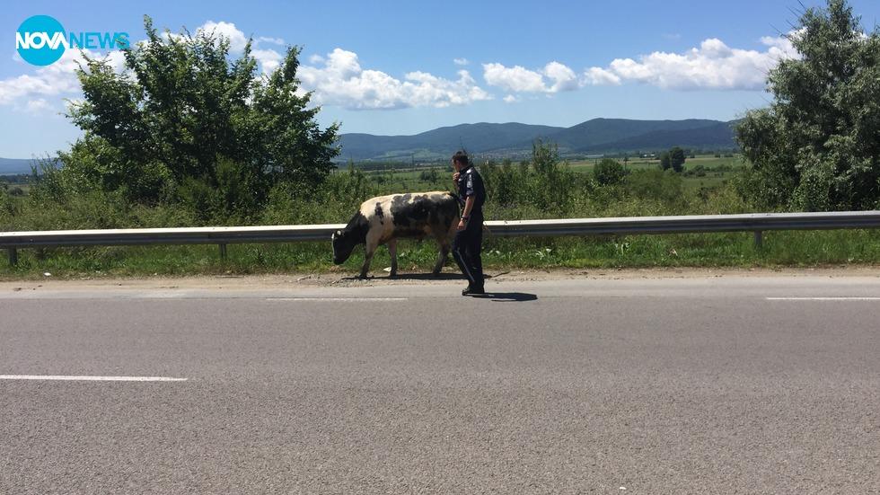 Бик на пътя