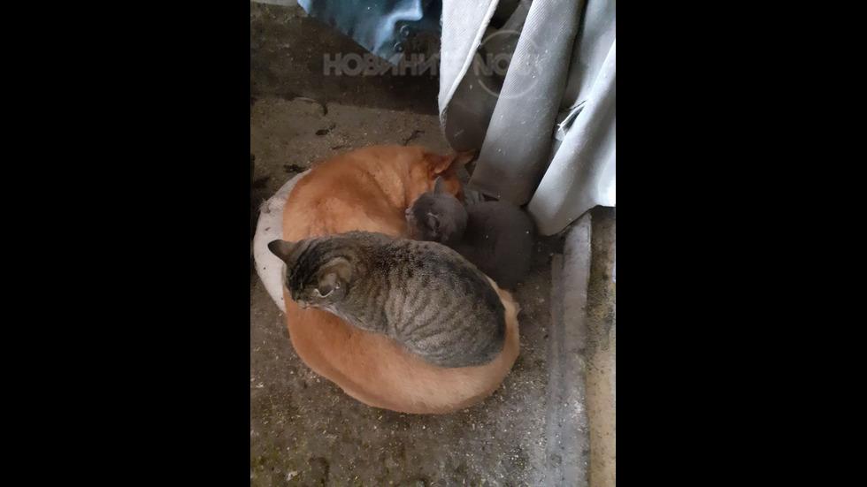Две котки спят върху куче