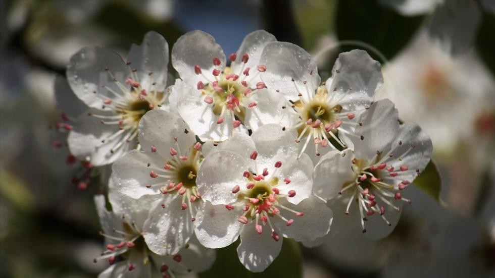 Пролет в Първомай