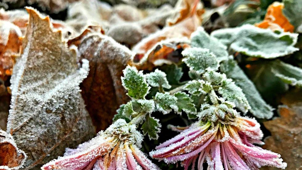 В днешното ледено студено утро