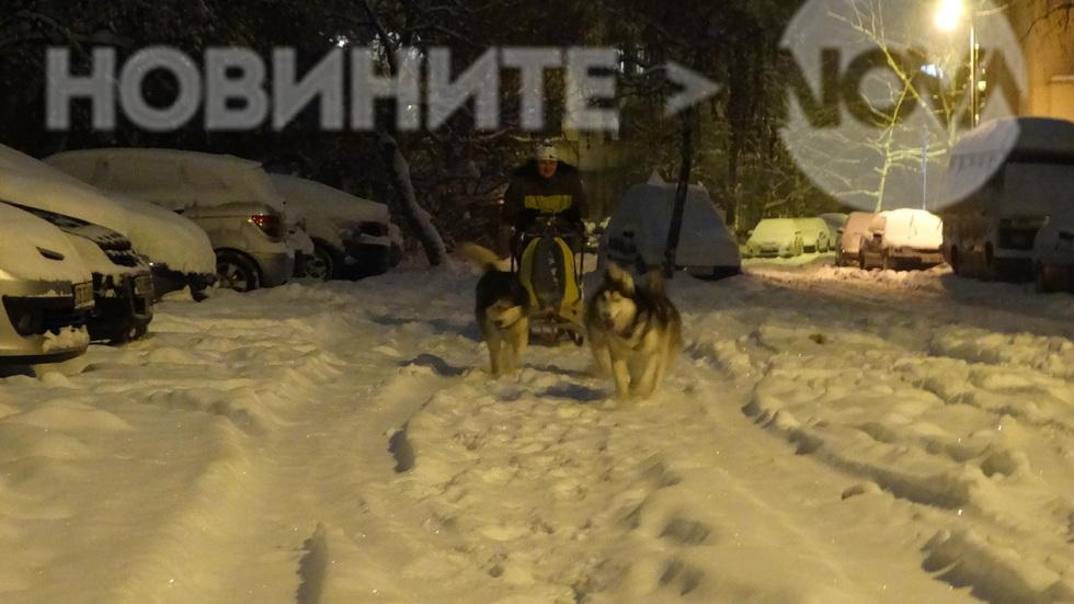 Кучешки впряг по улиците на София