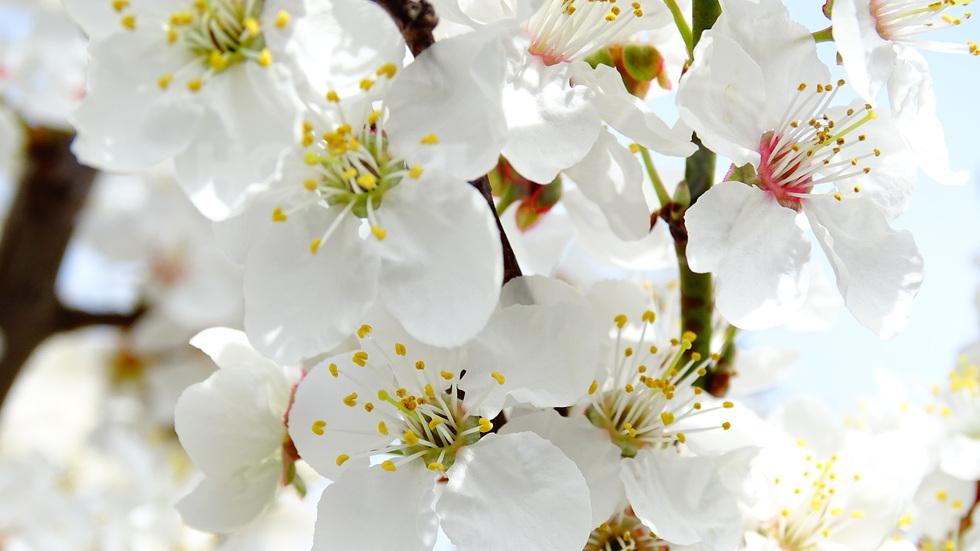 С дъх на пролет…