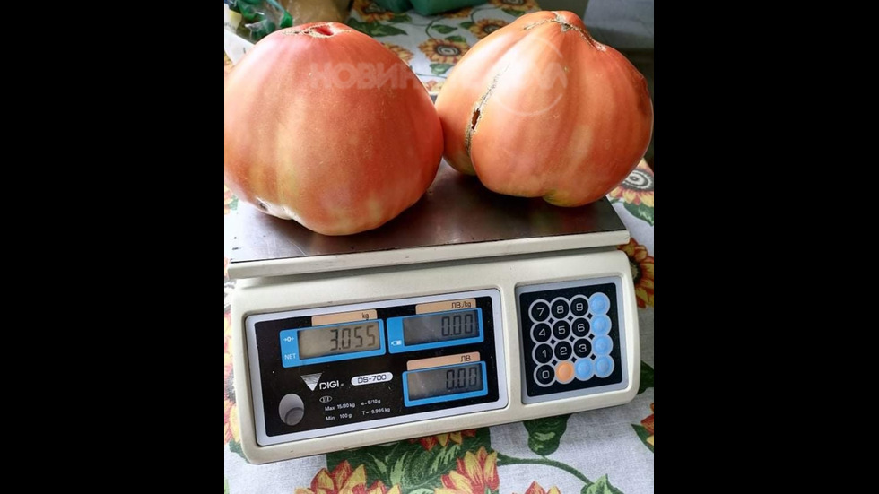 Гигантски домати