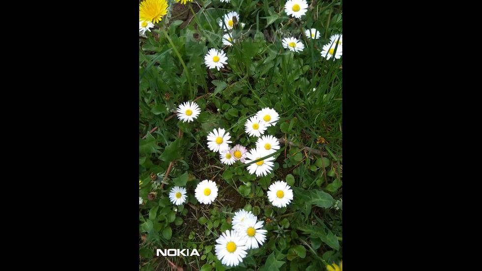 Пролетна нежност