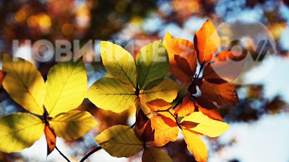 Вълшебна есен