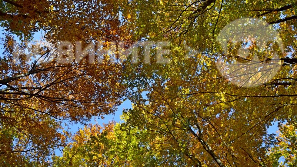 Есенна феерия
