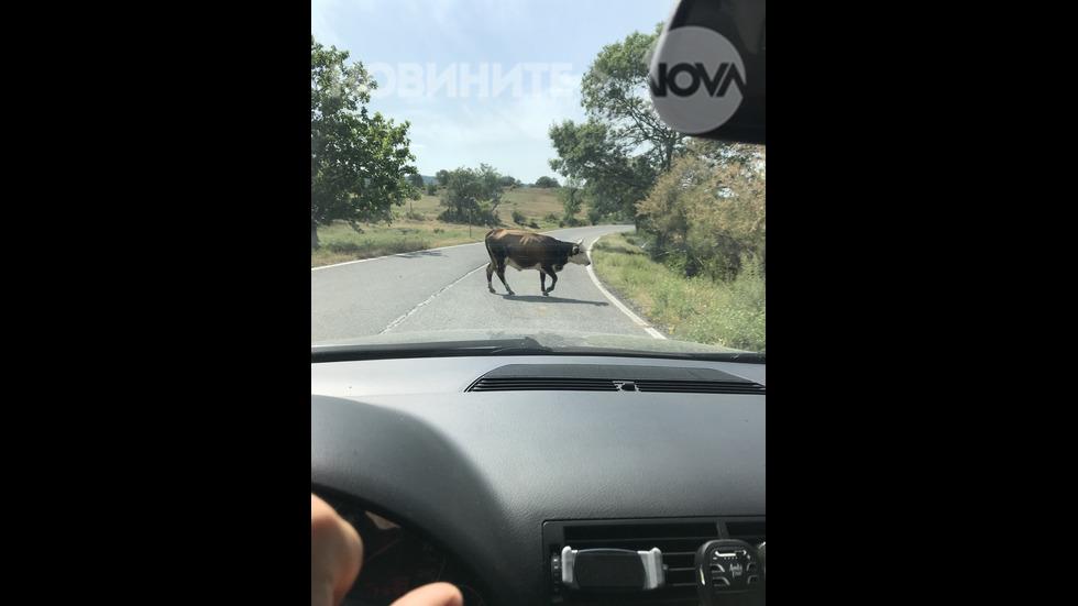Животни на главен път