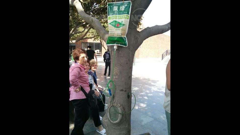 Грижа за дърветата в Китай