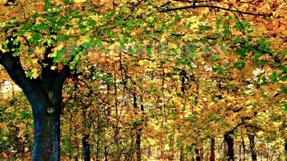 Пъстра есенна мозайка