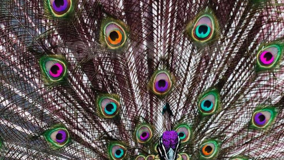 Плет от цветове