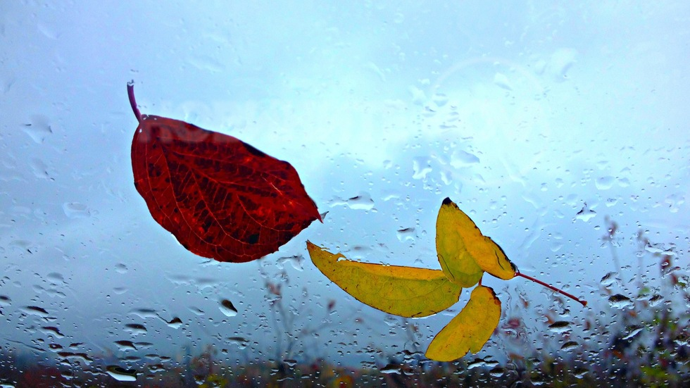 Дъждовен есенен ден
