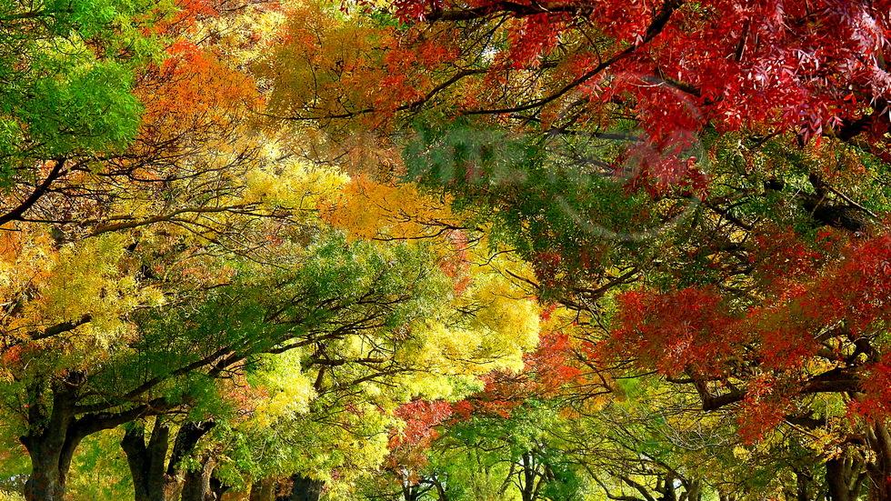 Добре дошла, златна есен!
