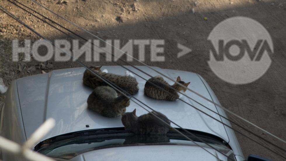 Котки паркират без пропуск в Синята зона на Пазарджик