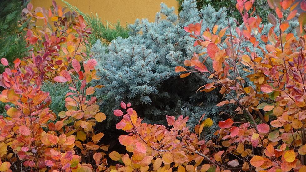 Цветна есен