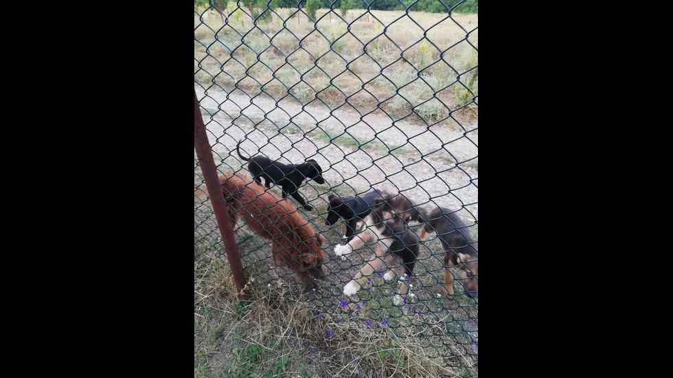 Бездомни кучета в село Богьовци