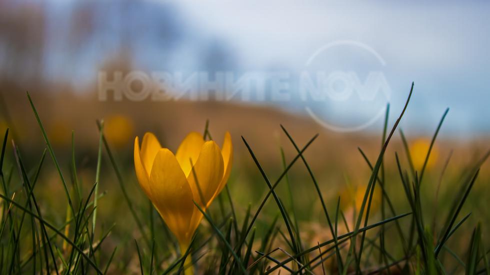 Усеща се вече настъпването на пролетта...
