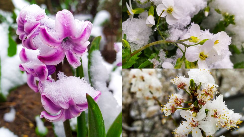 Зимата, затиснала пролетта