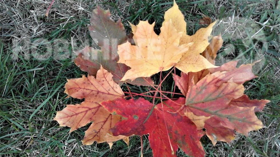 Есента рисува!