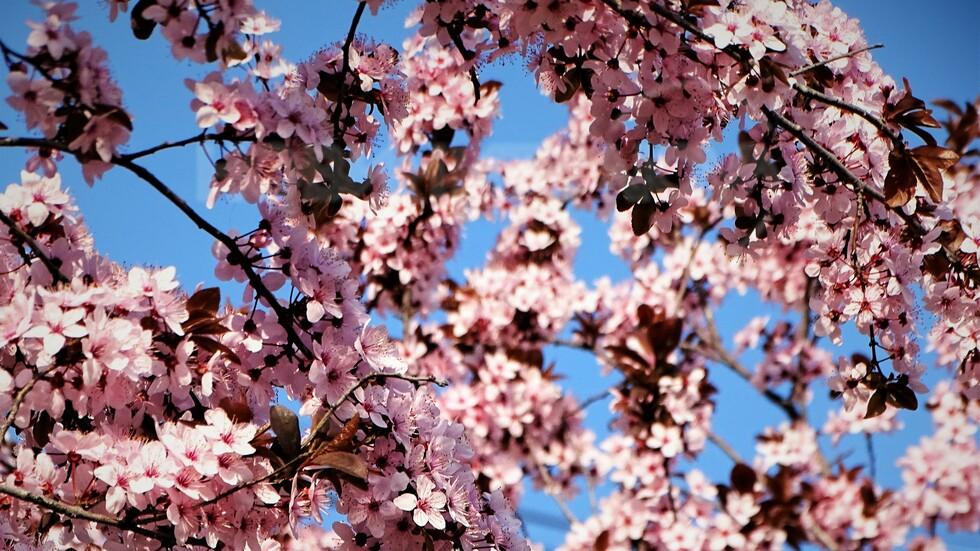Пролет в розово!