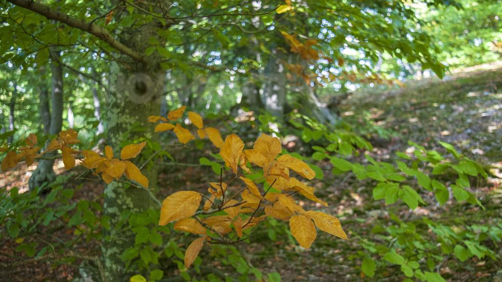 С бавни крачки пристъпва есента..