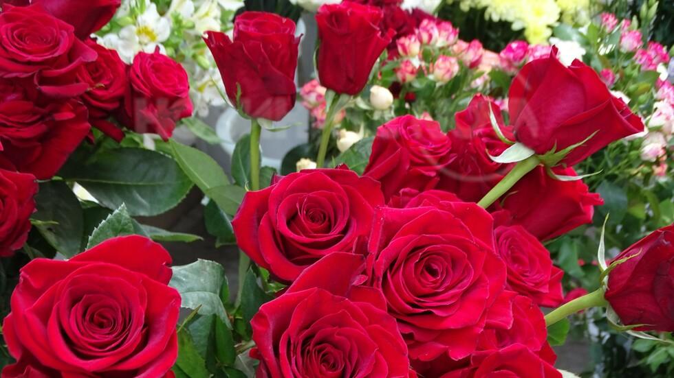 Много цветя за Нова телевизия-за Цветница!