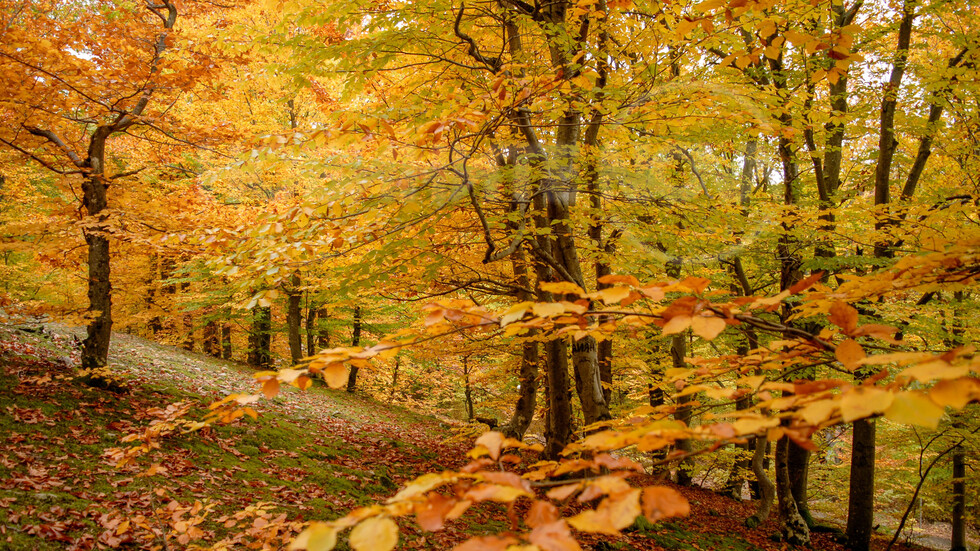 Златна есен от Котленския Балкан!