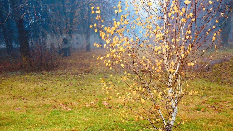 Нежна есенна брезичка сред мъглата
