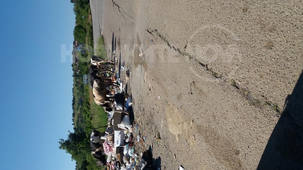 Крави се хранят с боклука на вилно селище!