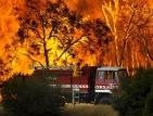 50 пожара се гасят в страната