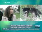 На живо от Божурище: Джип на общината избивал бездомните кучета