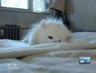 Домашен любимец без надзор нападна жена и кучето й
