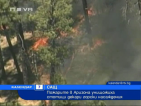 Пожарите в Аризона унищожиха стотици декари горски насаждения
