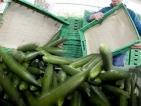 Евроексперти решават дали да има обезщетения за зеленчукопроизводителите