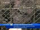 Заради европейски норми зоопаркът в Стара Загора остава без шимпанзето Били
