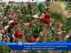 Хиляди почетоха паметта на жертвите в Норвегия с рози, вдигнати към небето