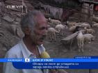 Овчари на пост до стадата си заради мечка-стръвница