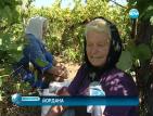 Жандармерия и полиция пазят лозята от кражби на реколта