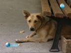 Удължиха срока за справяне с проблема с бездомните кучета