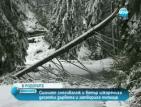 Силният снеговалеж и вятър изкорениха десетки дървета и затвориха пътища в Родопите