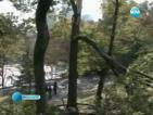 Режат 1000 дървета в Сентрал парк заради необичайната снежна буря
