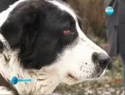 Подхвърлена отрова в парк уплаши собственици на кучета в Пловдив