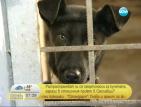 Разпространяват смъртоносни за кучетата зарази в столичен приют?