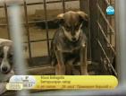 Укриват ли се зарази в общинския приют за кучета в Сеславци?