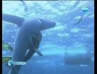 Международният фестивал за подводни филми е в София за втори път