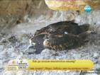 Как да опазим египетския лешояд?