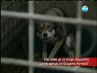 Ухапана от куче: Някой има интерес тези популации да са на улицата