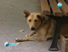 Прибират 2 000 от столичните бездомни кучета в приют
