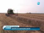 Очакват ни недостиг на пшеница и високи цени на зърното