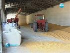 Проверяват зърнопрозводители и търговци в бранша